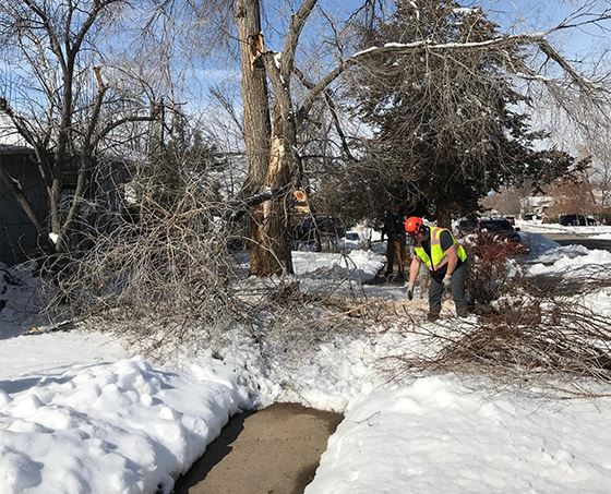 Worker cleans up fallen branches near tree